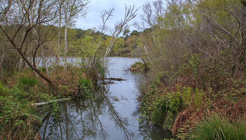 Balade autour de la Lagune de Contaut à Hourtin Gironde