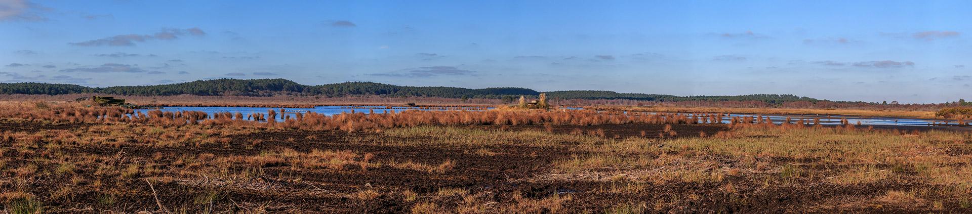 Nature à Contaut Piqueyrot au bord du lac de Hourtin Médoc