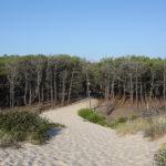 Reserve Naturelle des Dunes et Marais de Hourtin