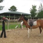 Cours et stage d'équitation à Hourtin en Gironde